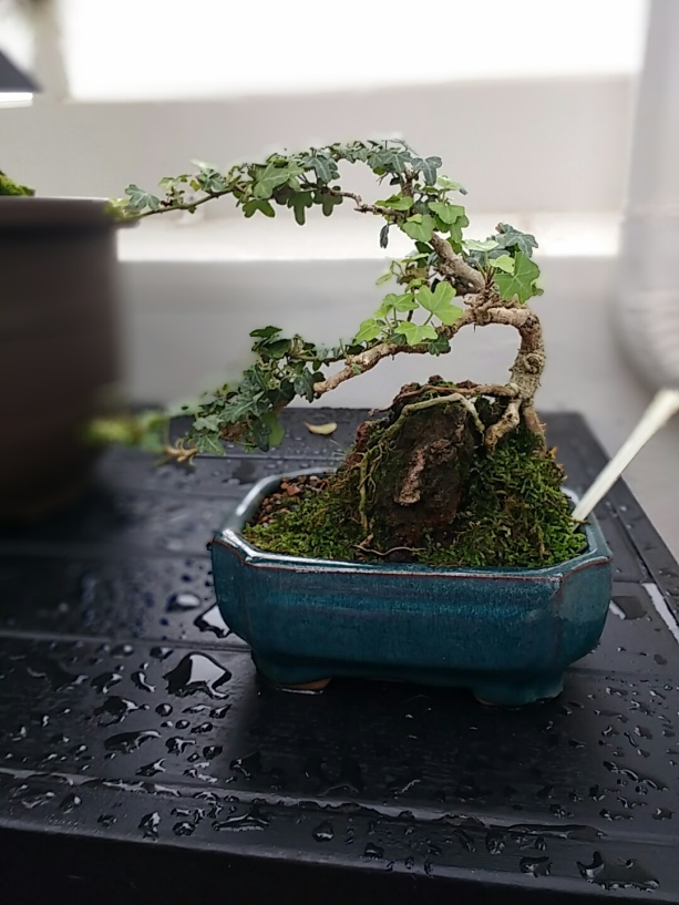 I'm obsessed with the bonsai collection at the Botanical Gardens.