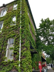 Ivy and brick.